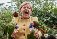 Приехавшую в птичий парк Меркель атаковал попугай